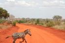 Czerwona ziemia w Tsavo East