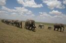 Amboseli, tutaj �yje najwi�cej s�oni