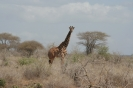 Park Narodowy Tsavo West